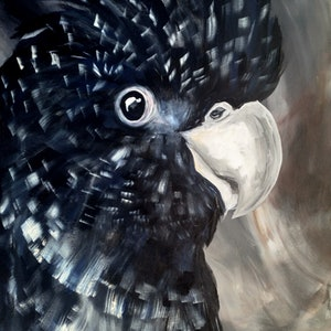 (CreativeWork) Red Tailed Black Cockatoo   by Amanda Skye. arcylic-painting. Shop online at Bluethumb.