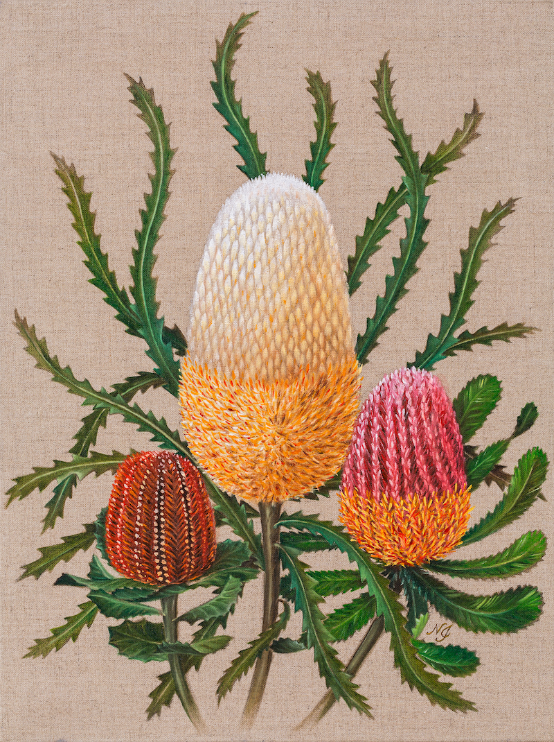 (CreativeWork) Three Banksias - Flower painting by Natasha Junmanee. Oil Paint. Shop online at Bluethumb.