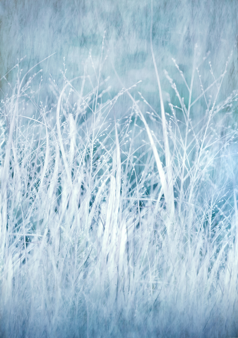 (CreativeWork) Winter by Melanie Smith. photograph. Shop online at Bluethumb.