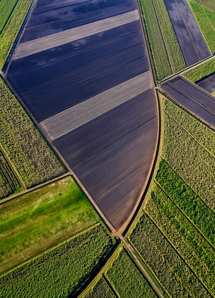 (CreativeWork) Sugar cane fields 1 by Stuart Chape. photograph. Shop online at Bluethumb.