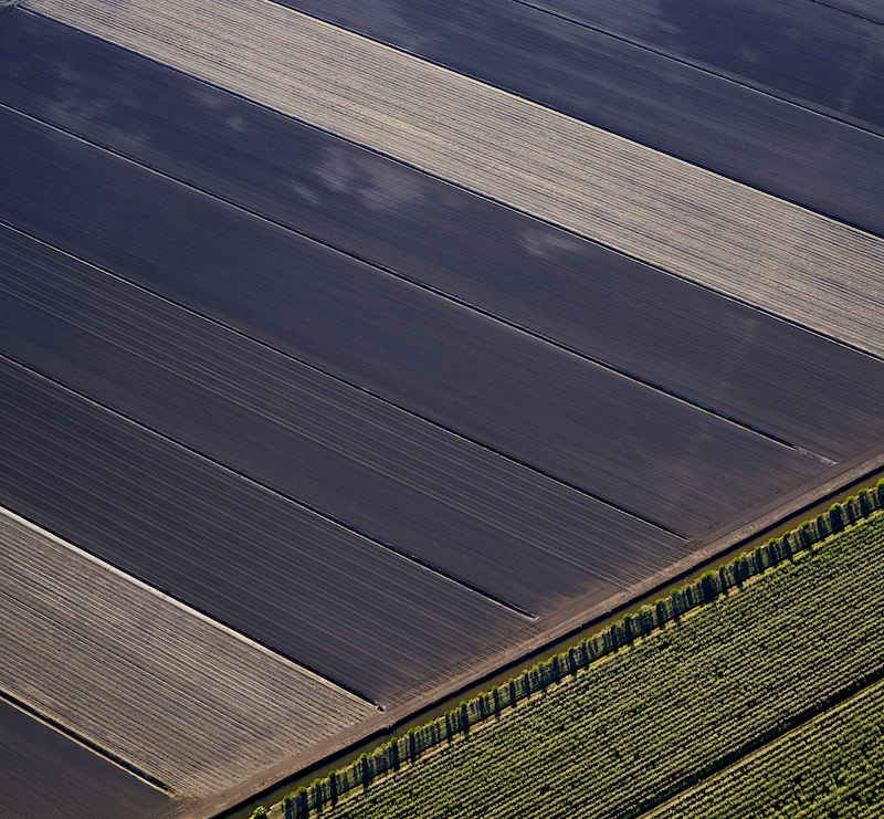 (CreativeWork) Sugar cane fields 2 by Stuart Chape. photograph. Shop online at Bluethumb.