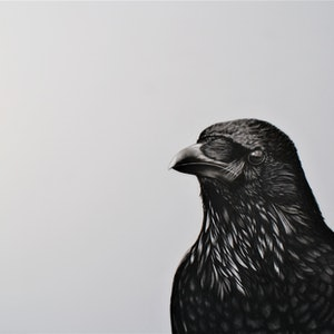 (CreativeWork) Raven by Craig Williams. drawing. Shop online at Bluethumb.