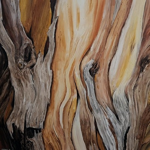 (CreativeWork) The Jupiter Tree by Shannon Sproule. arcylic-painting. Shop online at Bluethumb.