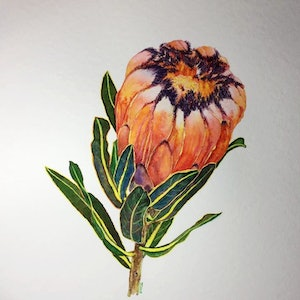 (CreativeWork) protea-neriifolia by Jing Tian. watercolour. Shop online at Bluethumb.