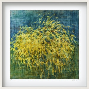 (CreativeWork) 'WANAKA PAMPAS GRASS'  in white frame   Ed. 24 of 25 by George Hall. print. Shop online at Bluethumb.