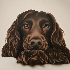 (CreativeWork) Chocolate Cocker Spaniel by Erin Hale. arcylic-painting. Shop online at Bluethumb.