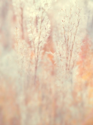 (CreativeWork) Whisper by Melanie Smith. Photograph. Shop online at Bluethumb.