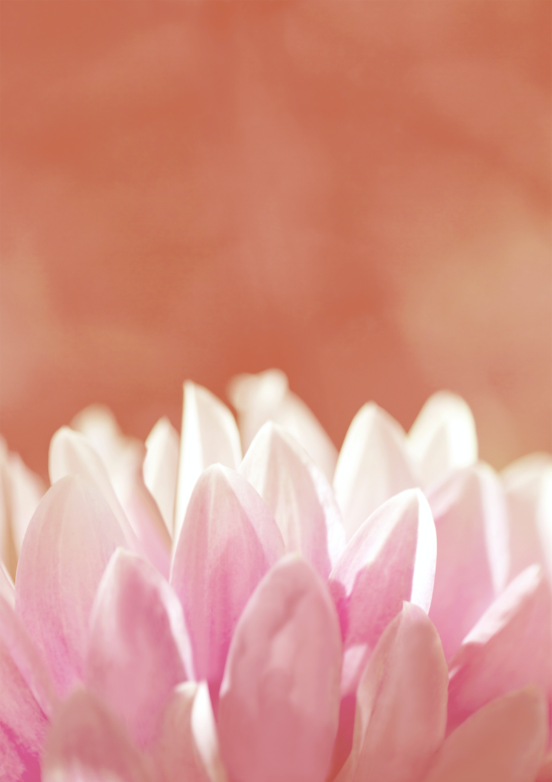 (CreativeWork) Dahlia by Melanie Smith. photograph. Shop online at Bluethumb.