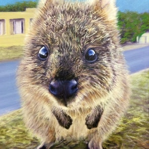 (CreativeWork) Quokka Baby Ed. 1 of 100 by Julie-Ann Brown. print. Shop online at Bluethumb.