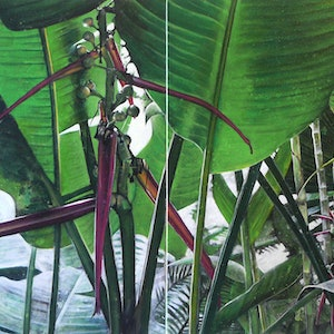 (CreativeWork) sun through the heliconia by Claire Souter. #<Filter:0x00007fbca8be24b0>. Shop online at Bluethumb.