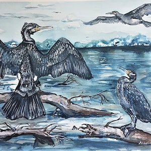 (CreativeWork) Great Cormorants by Liz H LOVELL. watercolour. Shop online at Bluethumb.
