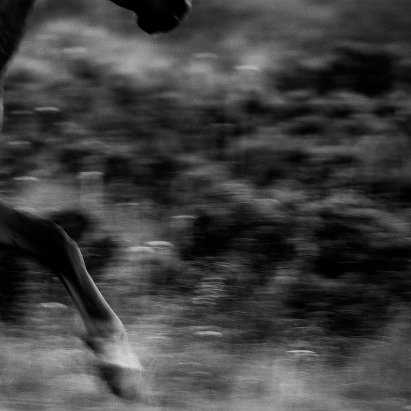 (CreativeWork) Untitled 4,  Brumby   by Ebony Finck. photograph. Shop online at Bluethumb.