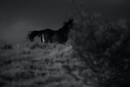 (CreativeWork) Untitled 7,  Brumby     by Ebony Finck. photograph. Shop online at Bluethumb.
