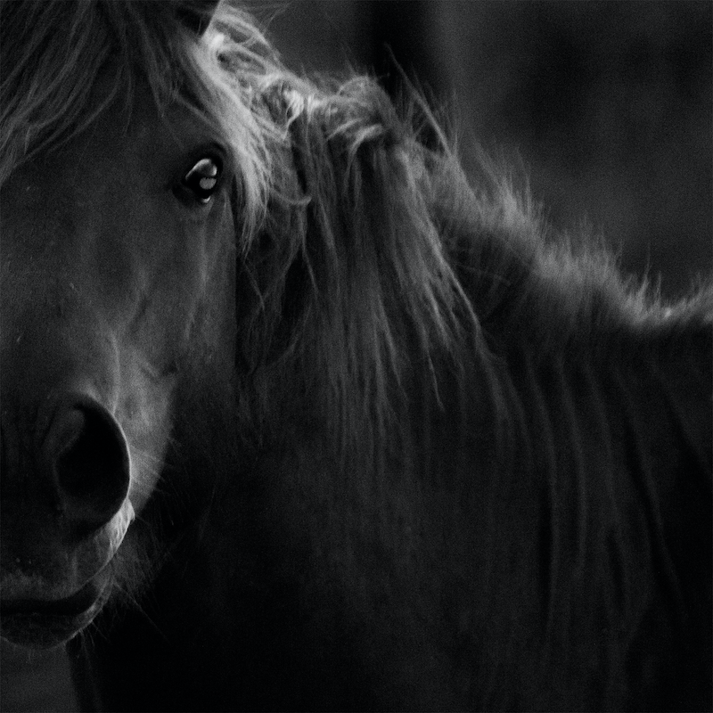(CreativeWork) Untitled 13,  Brumby  by Ebony Finck. photograph. Shop online at Bluethumb.