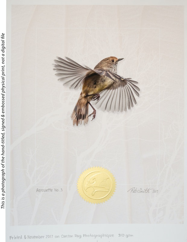 Aerouette No. 3 ( Brown thornbill in flight against a textured background )