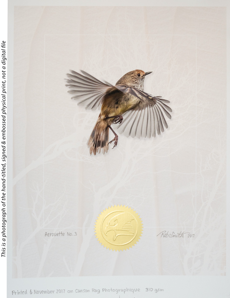 (CreativeWork) Aerouette No. 3 ( Brown thornbill in flight against a textured background ) by Rob Smith. photograph. Shop online at Bluethumb.