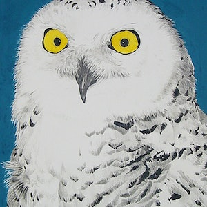 (CreativeWork)  Hedwig - A Portrait by STEVEN CARDNO. mixed-media. Shop online at Bluethumb.