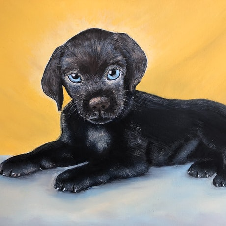 (CreativeWork) Buddy The Working Pup by Judy Staehr. Oil Paint. Shop online at Bluethumb.