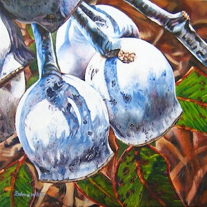 (CreativeWork) Caesia Silver Nuts by Delma White. oil-painting. Shop online at Bluethumb.