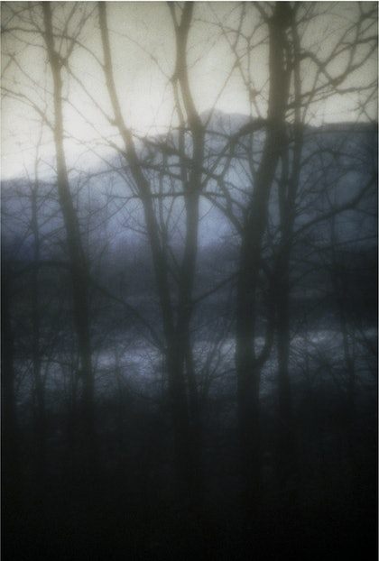 (CreativeWork) The Unknown Forest by Valentina Schulte. photograph. Shop online at Bluethumb.