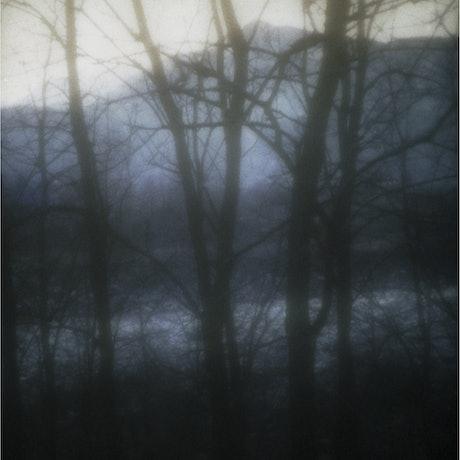 (CreativeWork) The Unknown Forest Ed. 4 of 8 by Valentina Schulte. Photograph. Shop online at Bluethumb.