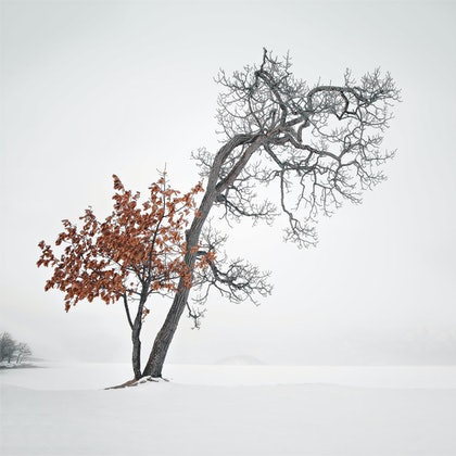(CreativeWork) Lake Kushiro Tree Study #1 by Robert Salisbury. photograph. Shop online at Bluethumb.
