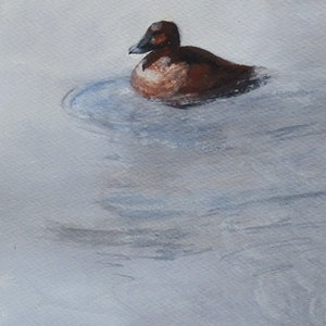 (CreativeWork) Hardhead Duck (f) Ref 7418 by Colin L. Williams. watercolour. Shop online at Bluethumb.