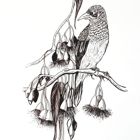 (CreativeWork) Yellow Throated Miner in Blossoms by Jeanette Giroud. Drawings. Shop online at Bluethumb.