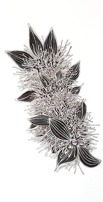 (CreativeWork) Hakea Petiolaris by Jeanette Giroud. Drawings. Shop online at Bluethumb.