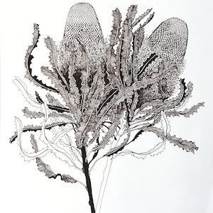(CreativeWork) Glorious Banksia (Banksia menziesii) by Jeanette Giroud. drawing. Shop online at Bluethumb.