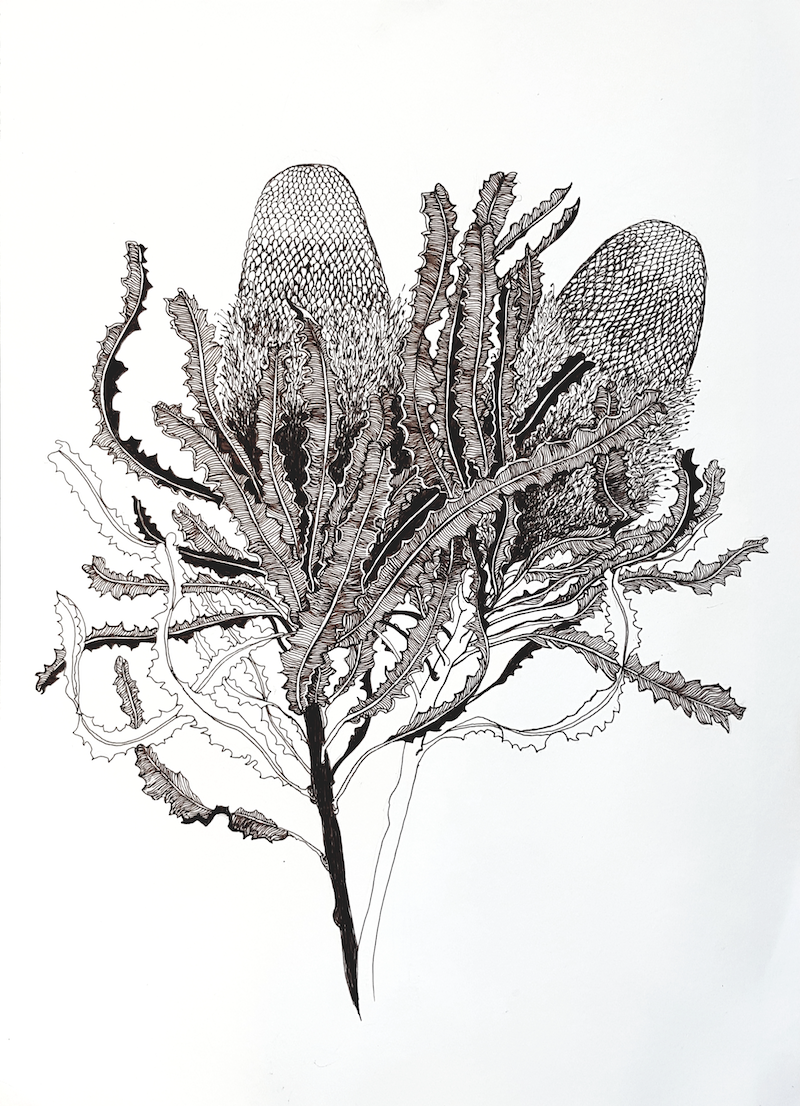 (CreativeWork) Glorious Banksia (Banksia menziesii) by Jeanette Giroud. Drawings. Shop online at Bluethumb.