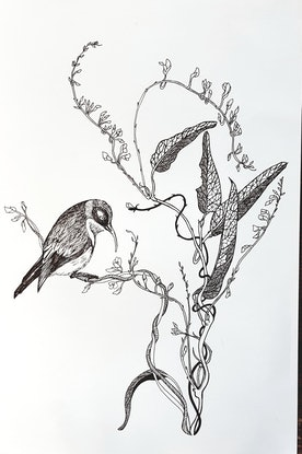 (CreativeWork) Western Spinebill in Hardenbergia by Jeanette Giroud. Drawings. Shop online at Bluethumb.