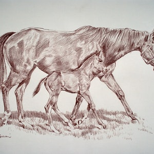 (CreativeWork) Mother and Foal by Robert Todonai. drawing. Shop online at Bluethumb.