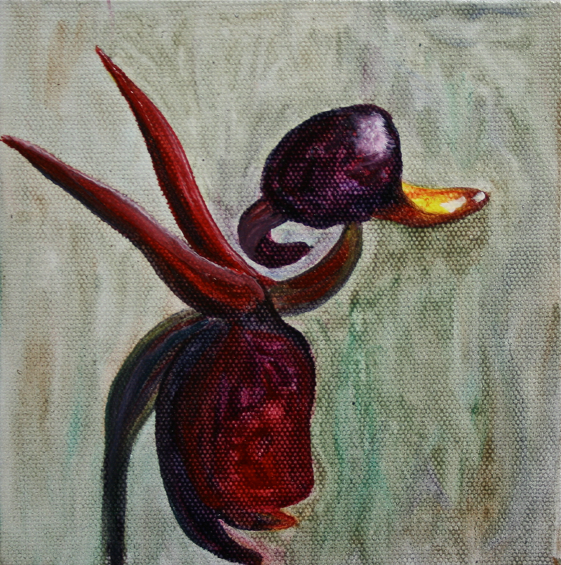 (CreativeWork) Duck Orchid by Stephanie Jakovac. oil-painting. Shop online at Bluethumb.