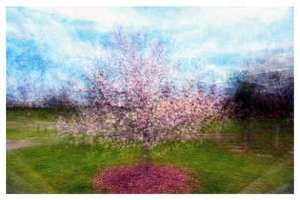 (CreativeWork) Spring Glory by Joseph Remi d'Argent. photograph. Shop online at Bluethumb.