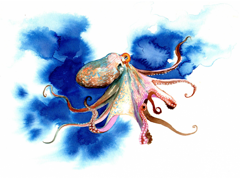 (CreativeWork) Blue octopus by Martin stauce. watercolour. Shop online at Bluethumb.