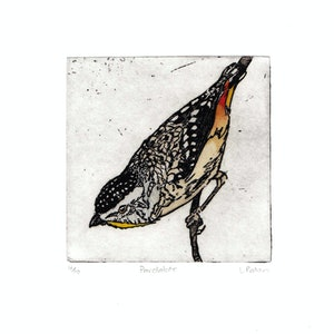 (CreativeWork) Pardalote (Etching 4/10) by Lydie Paton. print. Shop online at Bluethumb.