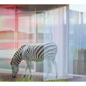(CreativeWork) Zebra in Tasmania Ed. 2 of 100 by Sarah Grace. #<Filter:0x00007f1f5c849658>. Shop online at Bluethumb.