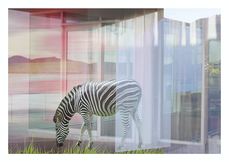 (CreativeWork) Zebra in Tasmania by Sarah Grace. photograph. Shop online at Bluethumb.