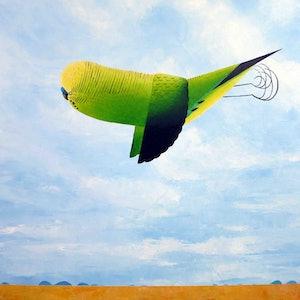 (CreativeWork) Budgerigar  by John Graham. oil-painting. Shop online at Bluethumb.