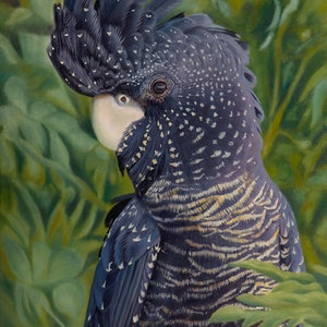 (CreativeWork) Nelly - Red Tailed Black Cockatoo by Nicky Shelton. oil-painting. Shop online at Bluethumb.