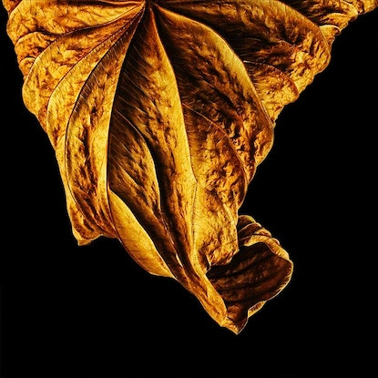 (CreativeWork) Golden Memorial No.2A Ed. 2 of 30 by ® Carmel Louise. Photograph. Shop online at Bluethumb.