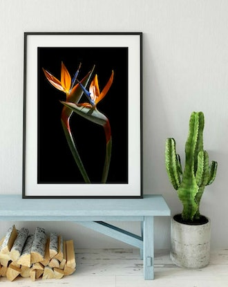 (CreativeWork) Birds Of Paradise Ed. 1 of 100 by Nadia Culph. Photograph. Shop online at Bluethumb.