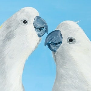 (CreativeWork) Mates- A pair of Sulphur Crested Cockatoos by Johanna Larkin. arcylic-painting. Shop online at Bluethumb.