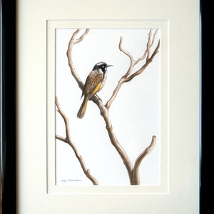 (CreativeWork) Song of the Honeyeater - [Framed] - watercolour painting by Nadya Neklioudova. #<Filter:0x00007f7b70a18ae0>. Shop online at Bluethumb.