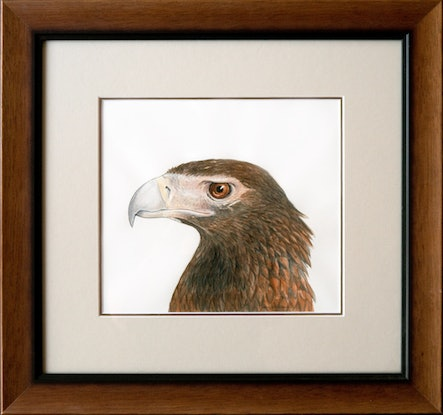 (CreativeWork) Wedge-Tailed Eagle - [Framed] - watercolour and ink by Nadya Neklioudova. #<Filter:0x00007f7bb4bd0330>. Shop online at Bluethumb.