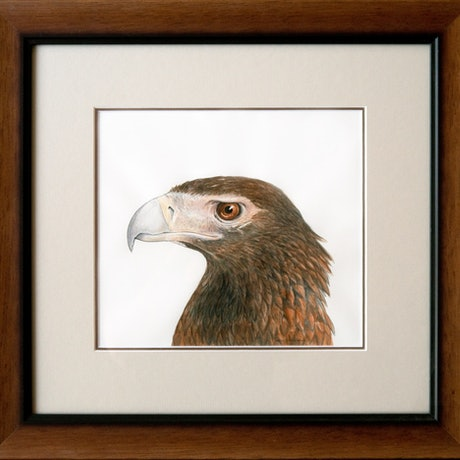 (CreativeWork) Wedge-Tailed Eagle - [Framed] - watercolour and ink by Nadya Neklioudova. Watercolour Paint. Shop online at Bluethumb.