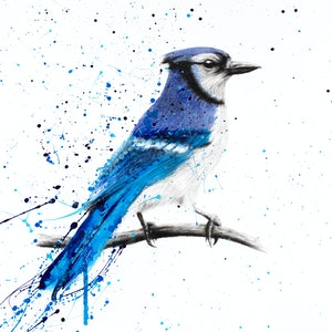 (CreativeWork) Blue Jay Sunday by Ashvin Harrison. drawing. Shop online at Bluethumb.