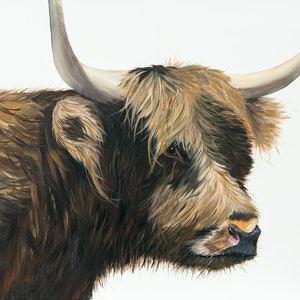 (CreativeWork) HIghland Cow by Johanna Larkin. arcylic-painting. Shop online at Bluethumb.