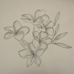 (CreativeWork) Frangipani  by Vanessa Yi-Kai TSAI. drawing. Shop online at Bluethumb.